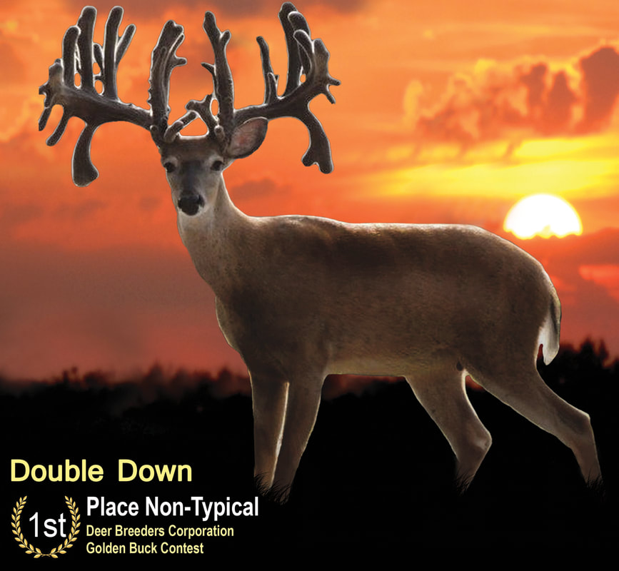 Best Non-Typical Buck Double Down