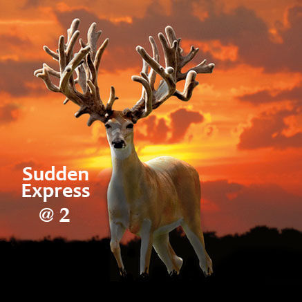 Sudden Express Whitetail Buck