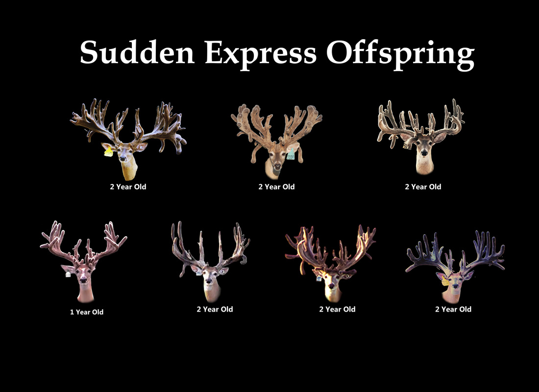 Sudden Express Sons and Offspring